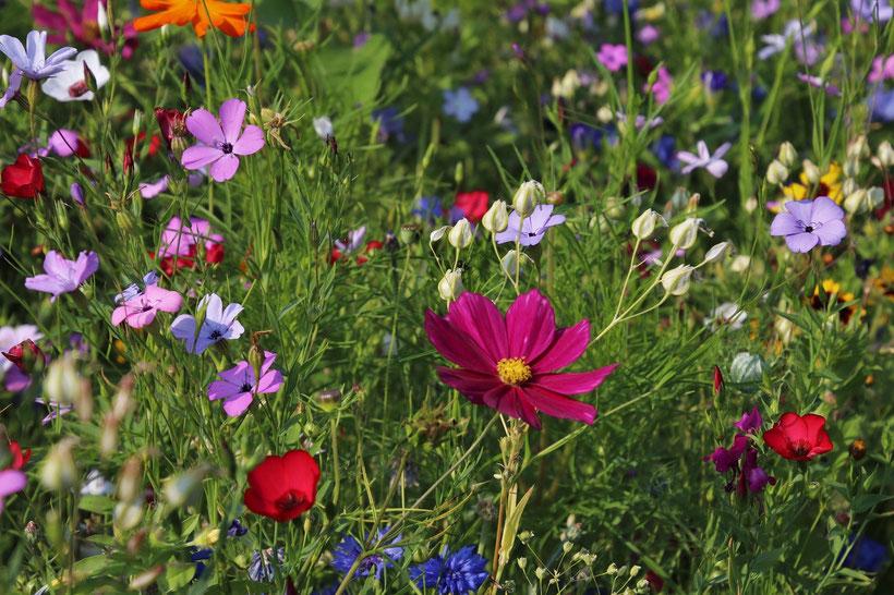 Die besten Gartenbücher über Englische Gärten: die Klassiker von Cottage Garden bis Landschaftspark