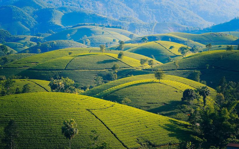 Die Briten und der Tee, Englischer Tee Zubereitung und Geschichte des Teetrinkens in England: Wie der Tee nach England kam