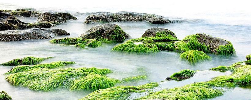 seaweed salads