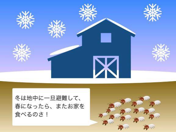 冬に地中に避難するシロアリ