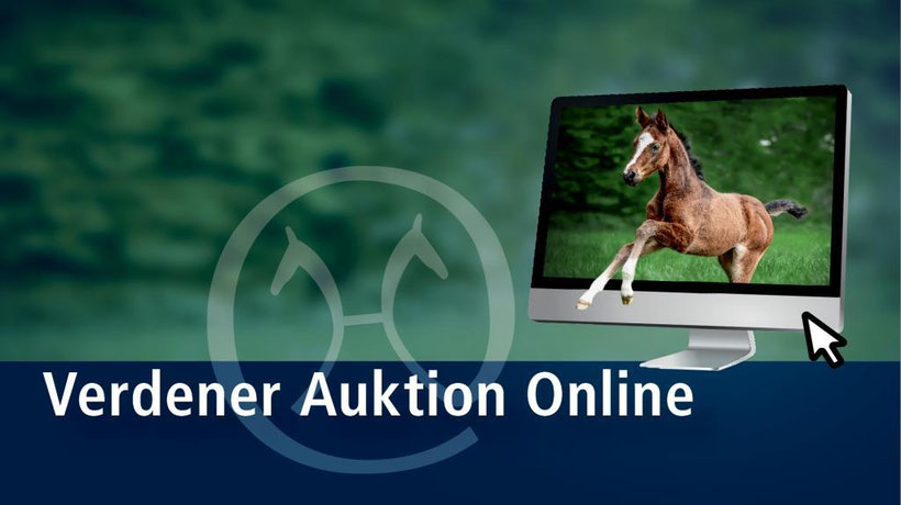 Hannoveraner, Hanoverian horse, horses for sale, horse auction, buy horse, foal, colt