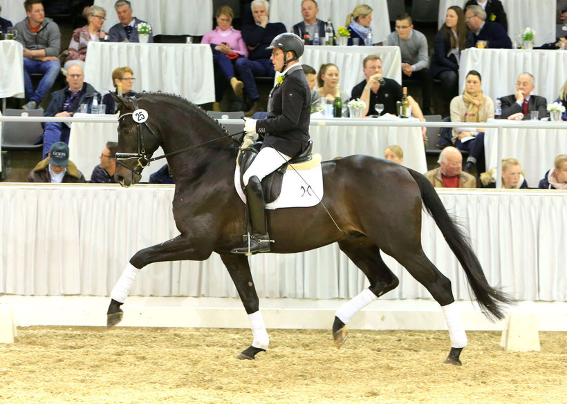 Hanoverian Horse, Dressage Horse, Jumping Horse, Riding Horse, Horse Auction, Niedersachsenhalle, Verden, Member of GHI