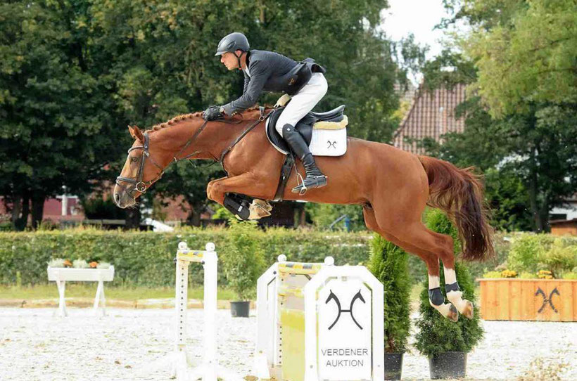 Hannoveraner, Hanoverian, Horse, Ridinghirse, Showjumping Horse, Dressage Horse, buy a horse, horse auction, elite auction, GHI member