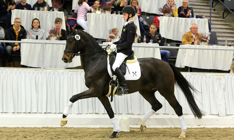 GHI member, Hanoverian, riding horses, buy showjumping horses, buy dressage horses, horse auction, Niedersachsenhalle, Verden