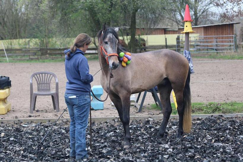 Wenn ein Pferd die Sicherheit des Menschen akzeptiert hat, kann man es behutsam an die gruseligen Dinge des Lebens gewöhnen.