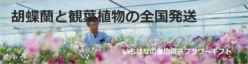 胡蝶蘭・観葉植物の全国発送