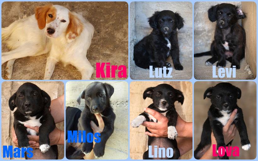Unsere schwarzen Schönheiten & die schöne Kira suchen eine neues Zuhause