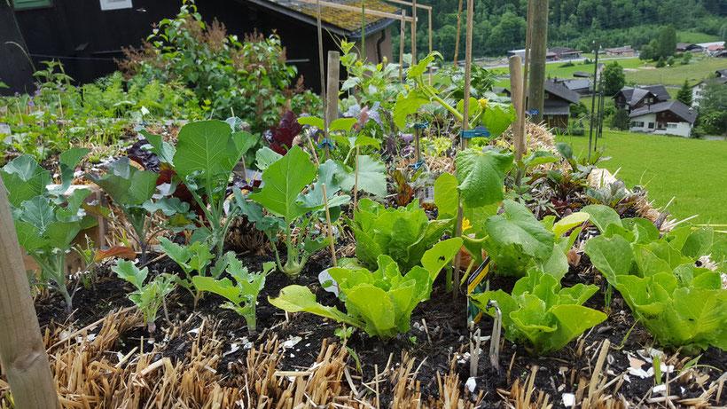 Gärtnern Auf - Strohballengarten Gaertnern Auf Strohballen Gemuese Pflanzen
