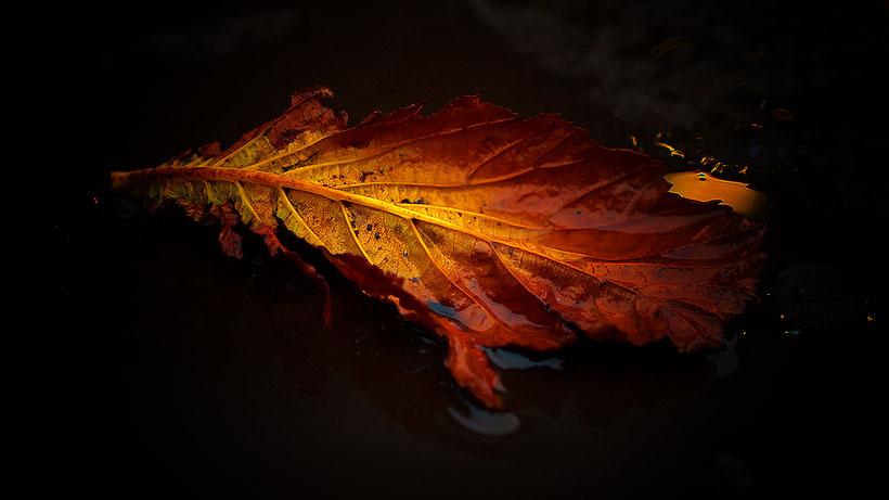 Herbstblatt in Pfütze...