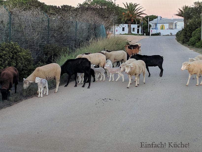 Ziegen auf der Strasse
