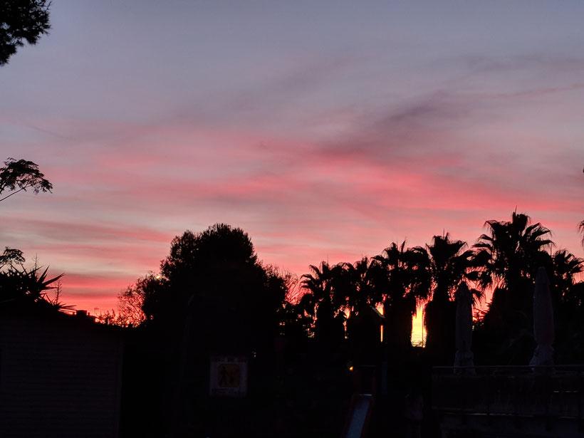 Palmen im Sonnenuntergang in Torredembarra