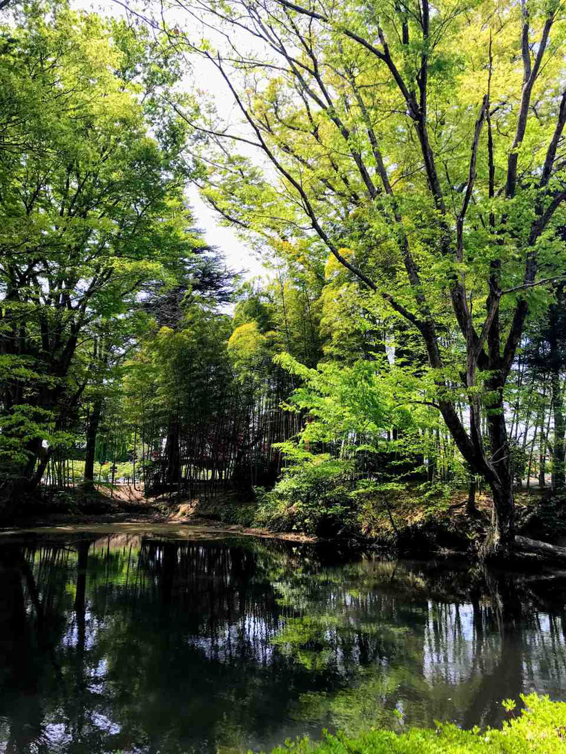国指定名勝 須賀川牡丹園
