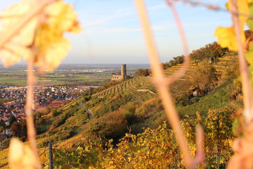 Weinwanderung an der badischen Bergstraße