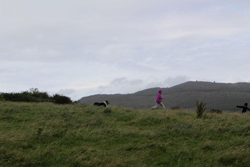 """Der """"Coastel Footpath"""" führt auch ein Stück über Weiden am Meer entlang"""