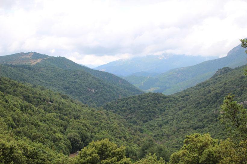 Supramonte, Foresta di Montes