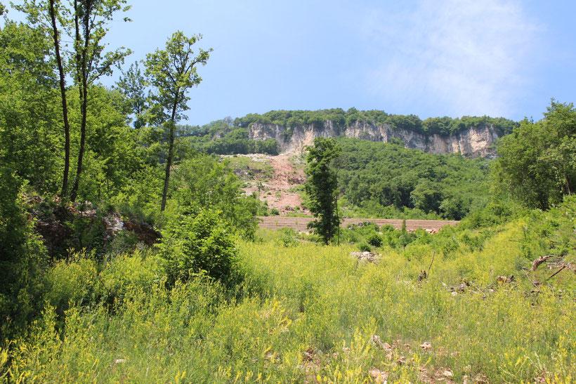 Blick zum Hang. Die Vegetation hat die Schäden teils schon wieder bedeckt