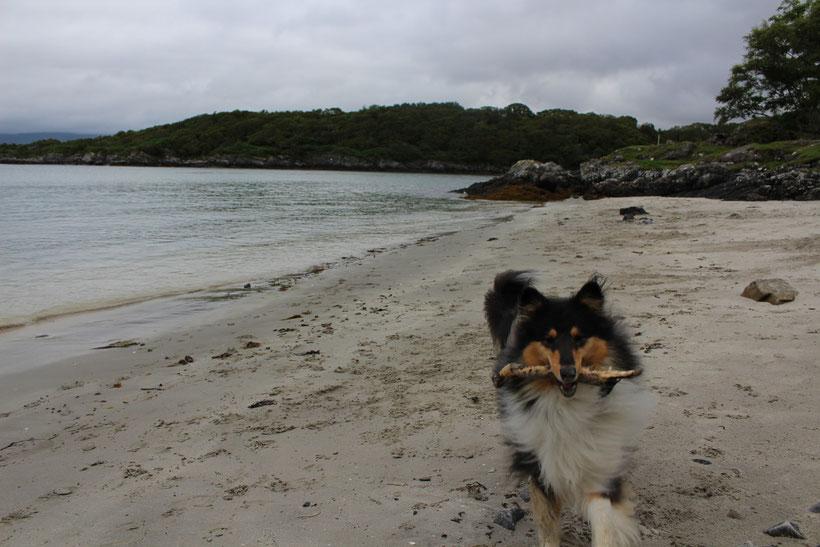 Weißer, feiner Sand. Glenuig, schottische Westküste