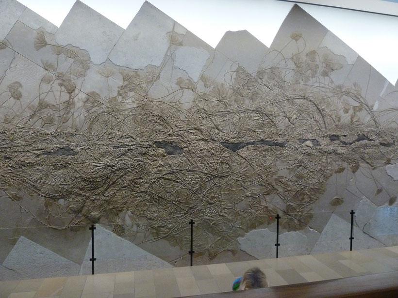 Urweltmuseum. Beeindruckend schöne Unterwasserpflanzen