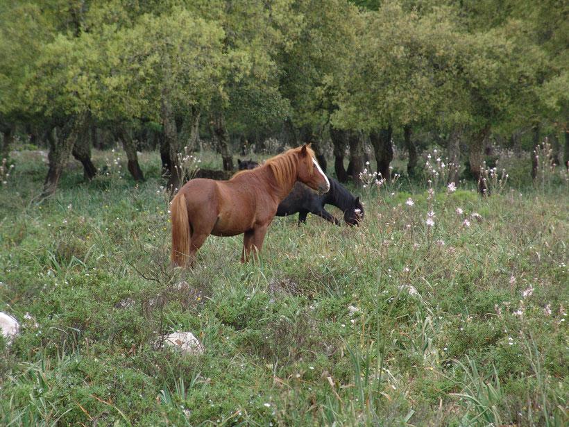 Sei ganz still! Die ersten freilaufenden Pferde entdeckt