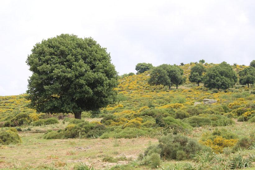 Auf dem Weg zum Foresta di Montes