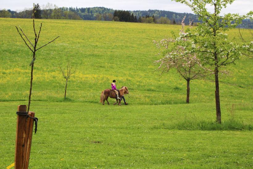 Durch tropfnasse Wiesen um den Tannenhof