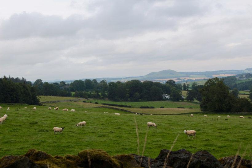 Landschaft in den schottischen Borders