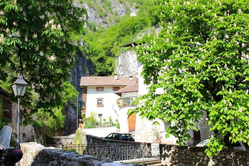 In Margreid, Südtirol Unterland