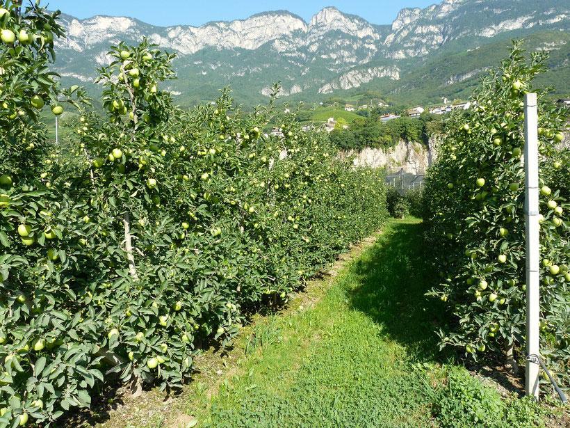 Durch die Obstgärten in den Ort Kurtatsch