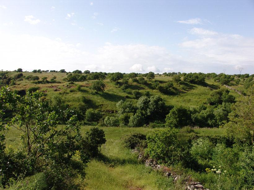 Agriturismo Nuragh`Elighe. Wanderweg über die Weide