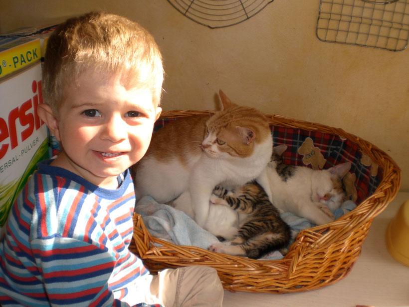 Besuch bei den Baby-Katzen
