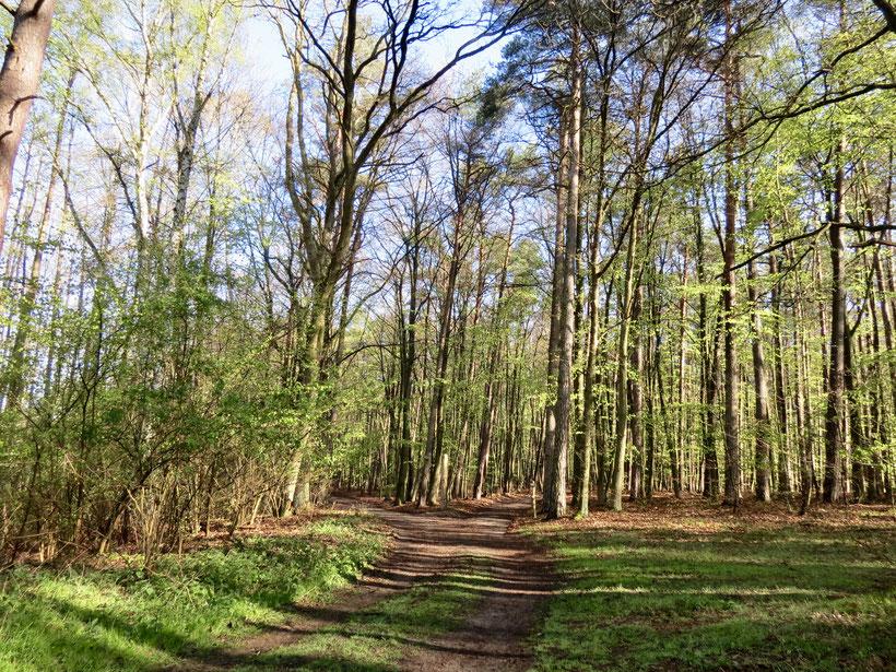 Wald im Frühling, Nationalpark, Wandern, Wanderwege, Müritz, Zwenzow