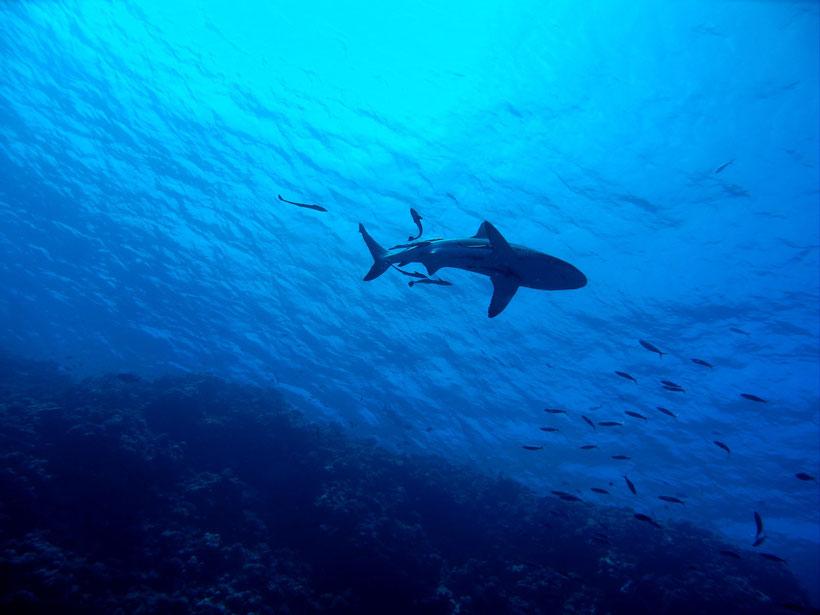 providencia diving