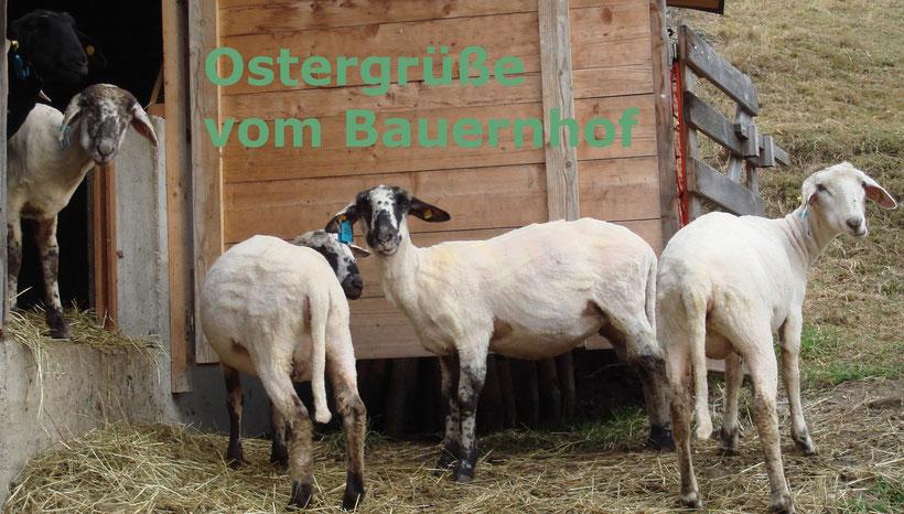 Ostergrüße vom Bauernhof