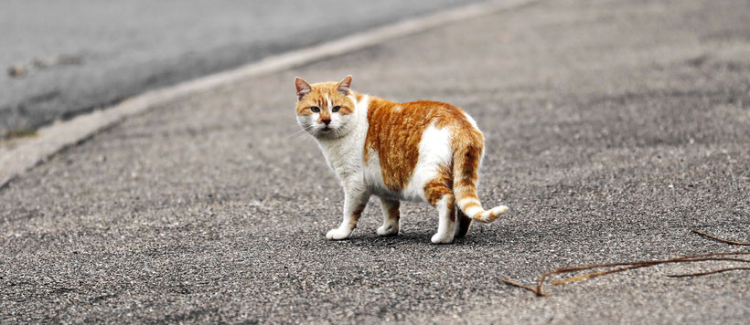 Katzenfotografie Lemestroff lorraine, Grandest Sierck-les-Bains, Kirschnaumen