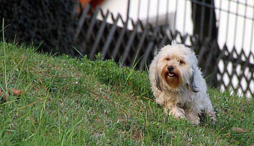 Hund im Holzbachtal-Stadion in Weiskirchen