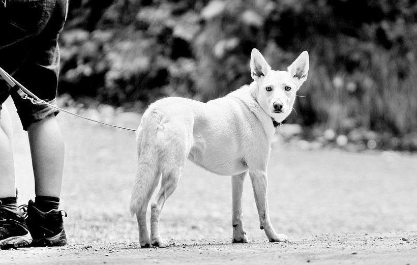 Hund an der Marienbrücke, Schloss Neuschwanstein (2014)