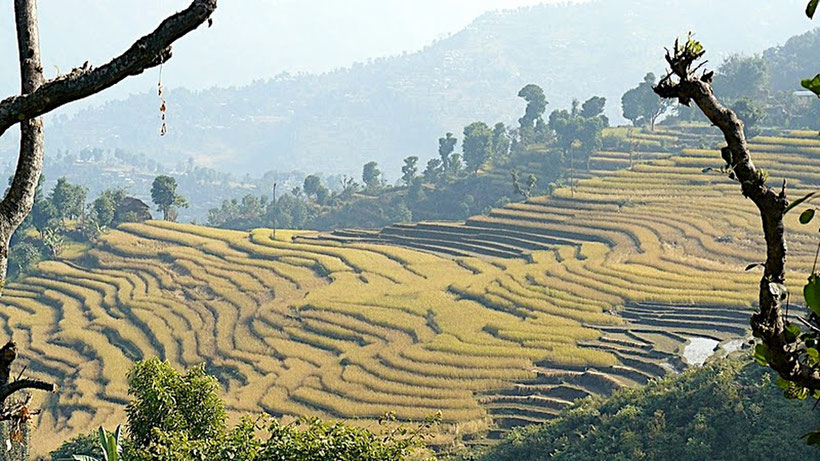 Contreforts de l'Himalaya, Népal