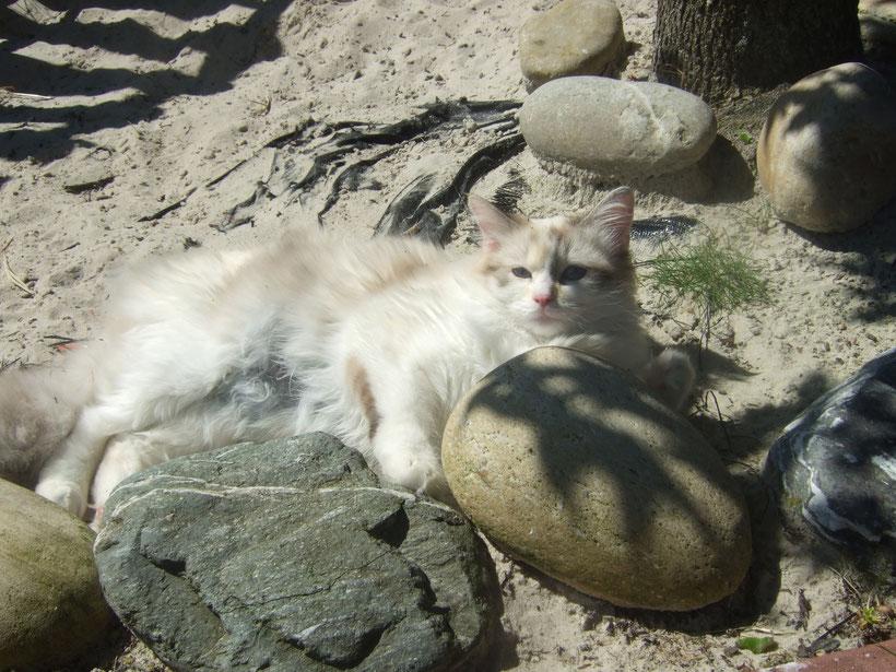 ein sonniges Plätzchen im Sand