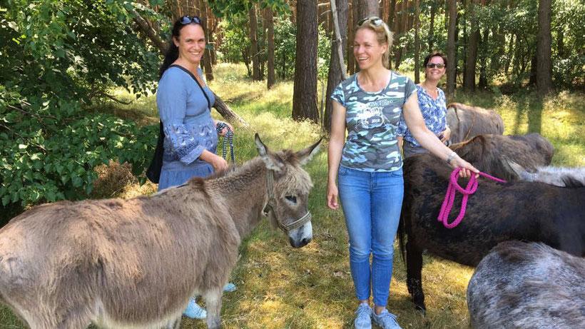 Esel-Workshop | Eselgruppe auf der Weide