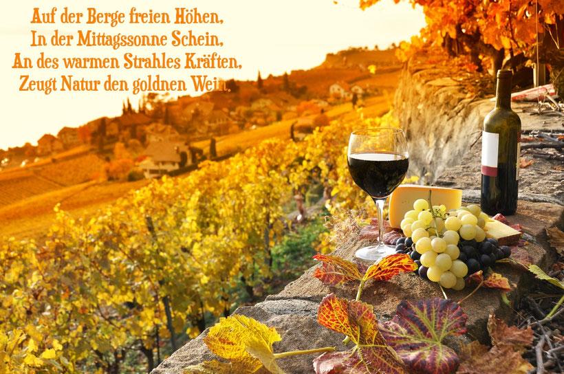 Auf der Berge freien Höhen, in der Mittagsson ne Schein, an des warmen Strahles Kräften, zeugt Natur den goldnen Wein