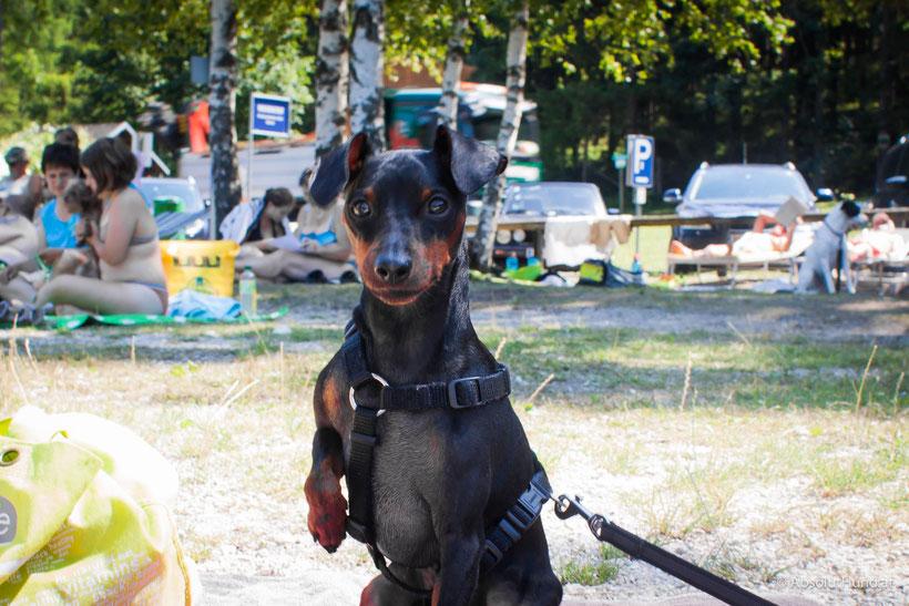 Endlich Urlaub – 5 Tipps für die Reise mit Hund