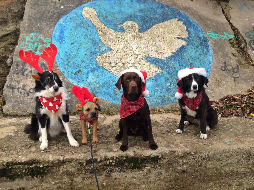 So sehen Gewinner aus... Hunde Adventskalender Perlenberg Frostfutter Barden