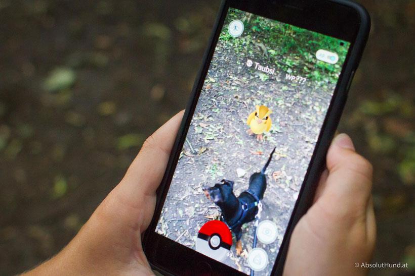 Wie Pokémon GO ein Hundeleben verändern kann