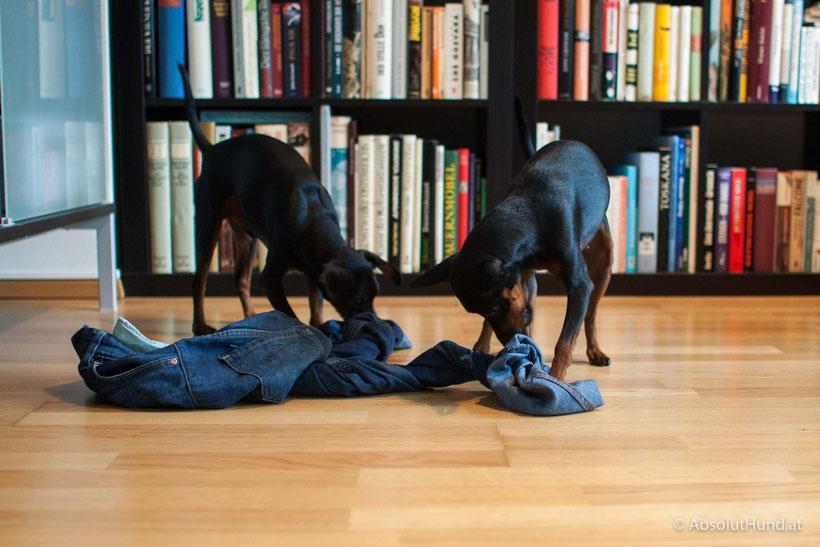 5 Tipps für Hunde