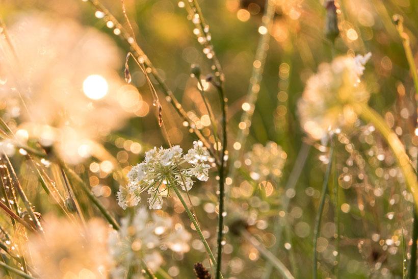 Het zonnetje komt na de bui te voorschijn en zorgt voor kleine diamantjes in een bloemenveld