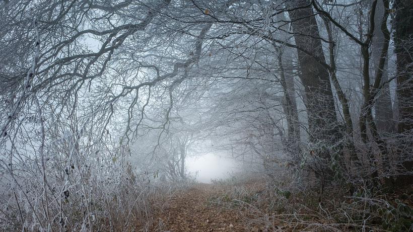 Winterlicht Waldweg zwischen Baden und Etelsen im Eisnebel