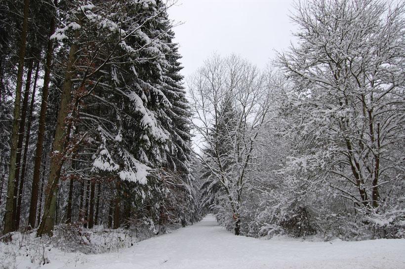 bei Weißenseifen, Dezember 2008