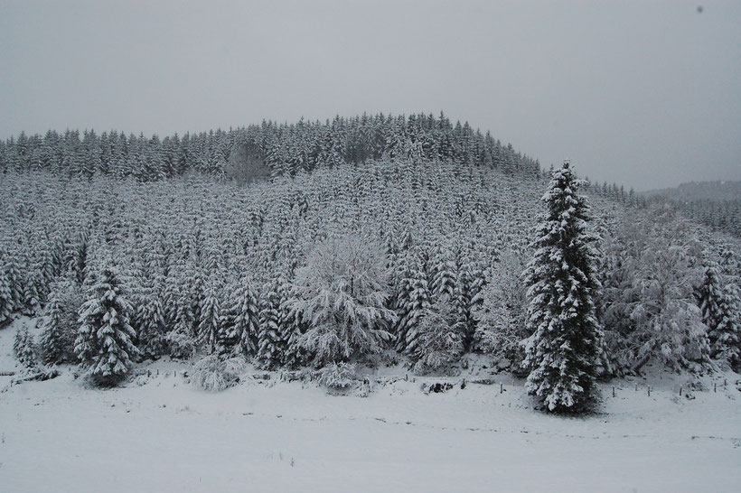 zwischen Neustraßburg & Seiwerath, Dezember 2008 (Eifelkreis Bitburg-Prüm)