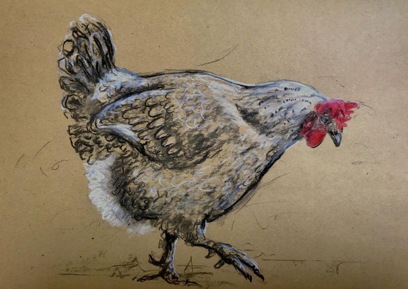 Schreitendes Huhn. Kohlezeichnung auf Packpapier mit Farbstiften und Kreide, 19.6.2018, Ulrike Martens.