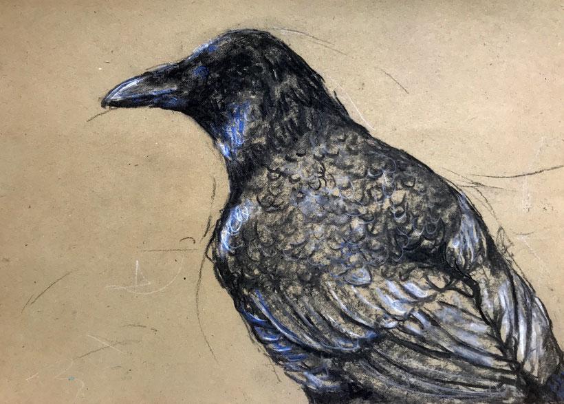 Zeichnung von einem Raben, der mit Kohle auf Packpapier gezeichnet ist.  Rabe 1, Kohle auf Packpapier, 210 x 297 mm, 2018.